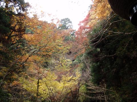 2010紅葉(鞍馬)14.jpg