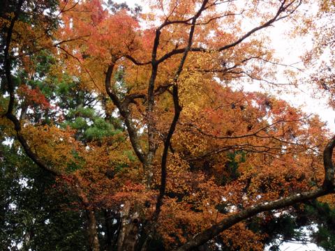 2010紅葉(鞍馬)16.jpg