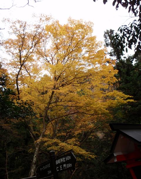 2010紅葉(鞍馬)19.jpg