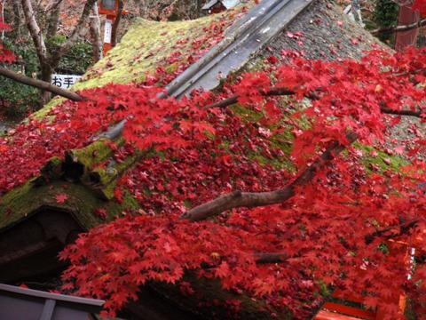 2010紅葉(鞍馬)2.jpg