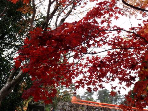 2010紅葉(鞍馬)22.jpg