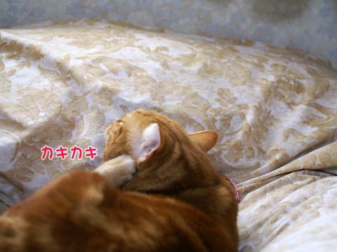 2011ひな祭り(すっぴん)1.jpg
