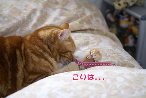 2011ひな祭り(すっぴん)3.jpg