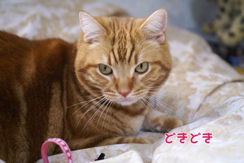 2011ひな祭り(すっぴん)6.jpg