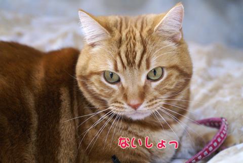 2011ひな祭り(すっぴん)7.jpg