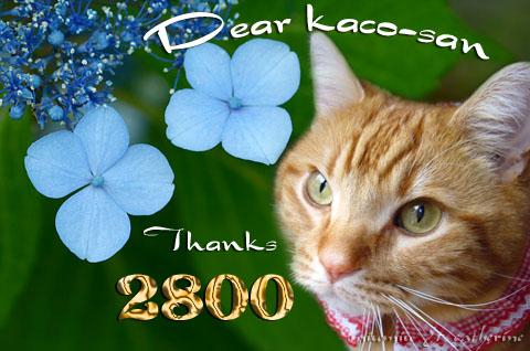 2800niceカード(to kaco△).jpg