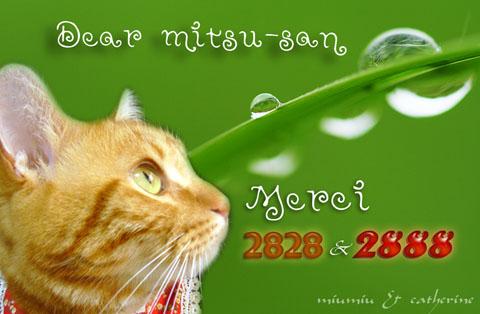 2828niceカード(to mitsu△).jpg