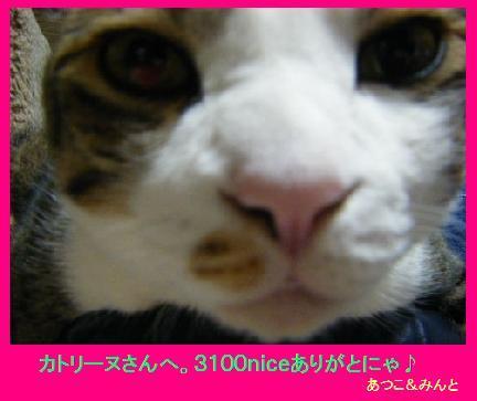 3100niceカード(fromあつこさん).jpg
