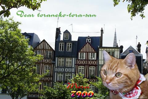 7900nice card(to toraneko-tora-san).jpg