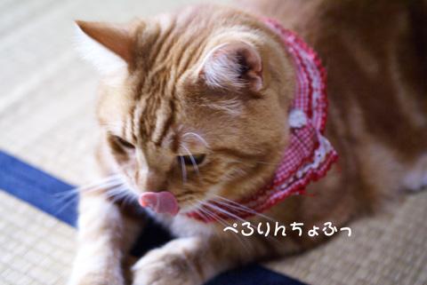 ぱたぱたとんぼ(ぺろりんちょふ).jpg