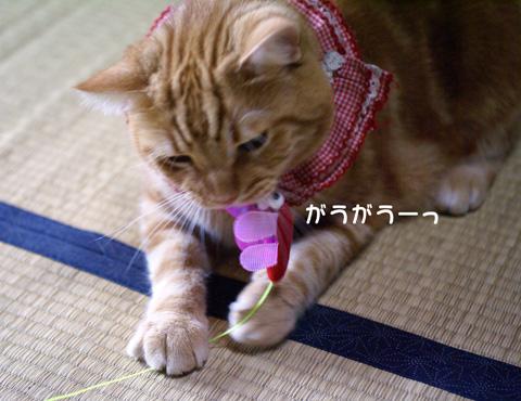 ぱたぱたトンボ(がうがう).jpg