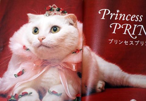 プリンちゃん3.jpg