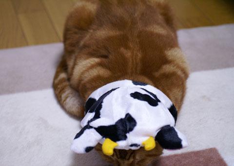牛にゃんでご挨拶.jpg