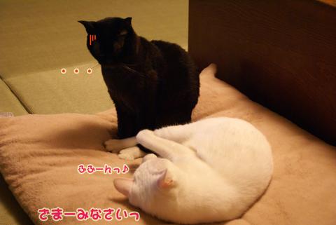 猫の時間25.jpg