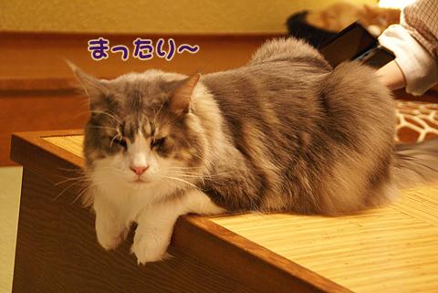 猫の時間26.jpg