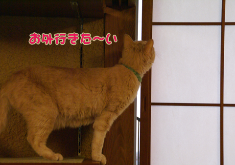 猫の時間30.jpg