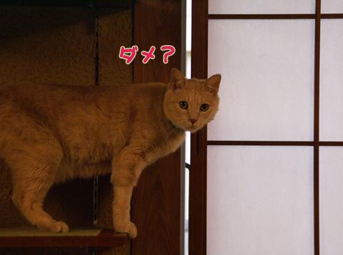 猫の時間32.jpg