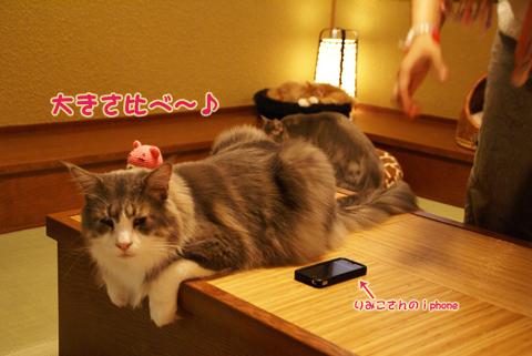 猫の時間34.jpg