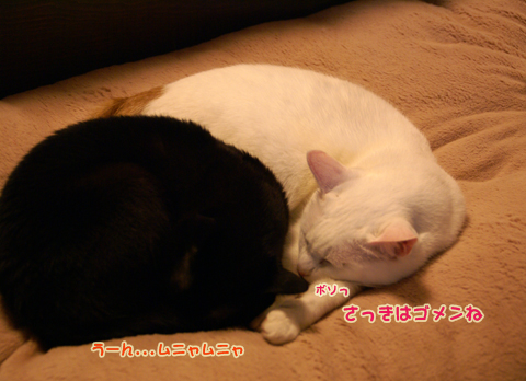 猫の時間43.jpg