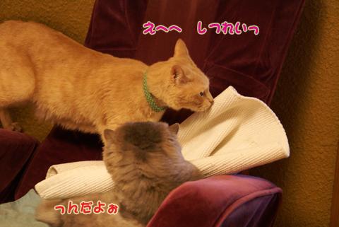 猫の時間44.jpg