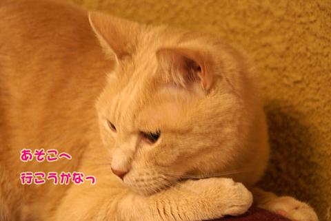 猫の時間46.jpg