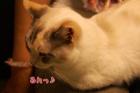 猫の時間53.jpg