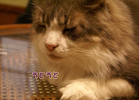 猫の時間57.jpg