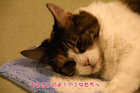 猫の時間62.jpg