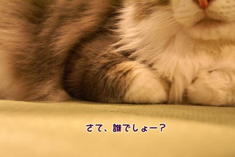 猫の時間68.jpg