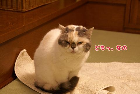 猫の時間70.jpg