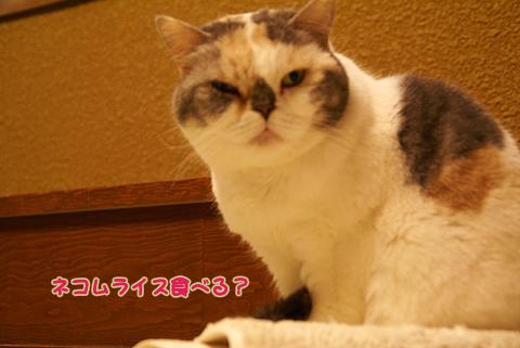 猫の時間72.jpg