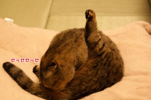 猫の時間74.jpg