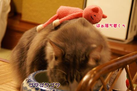 猫の時間80.jpg