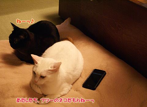 猫の時間91.jpg