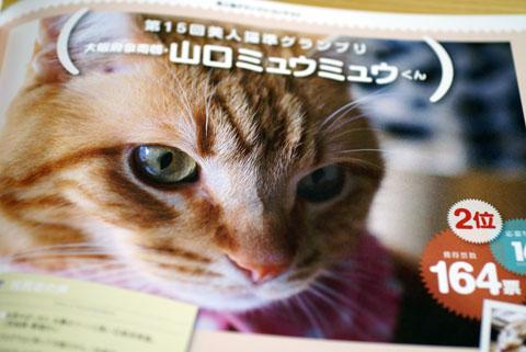 美人猫準グランプリ.jpg