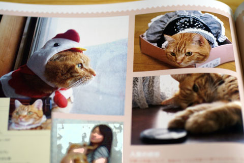 美人猫準グランプリ1.jpg