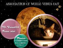 mini金星猫連合会員証(mint).jpg