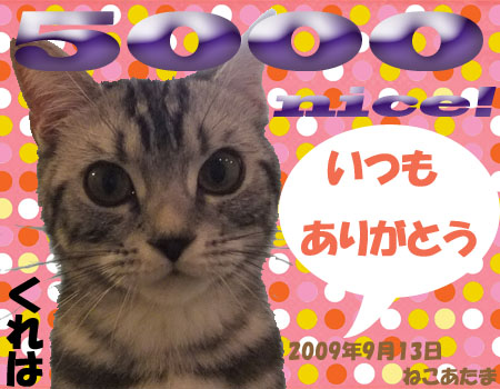 5000nice card(from ayafk-san).jpg