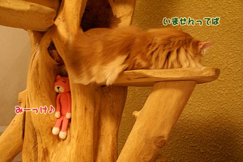 猫の時間66.jpg