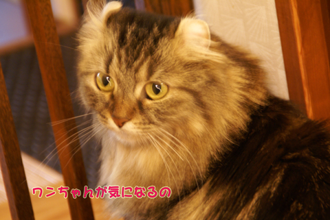 猫の時間85.jpg