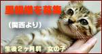 里親募集バナー(たまの玉手箱).jpg